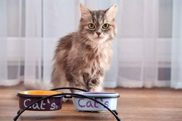 scegliere le ciotole per il gatto