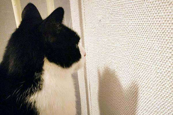 gatto che fissa il muro