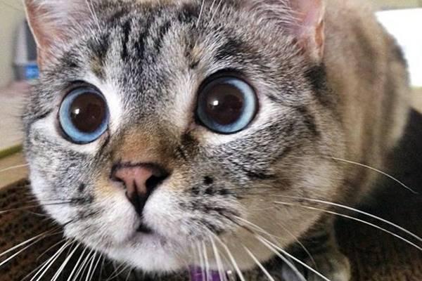 gatto che sta per attaccare una preda