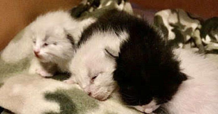 piccoli gattini allattati mamma cane