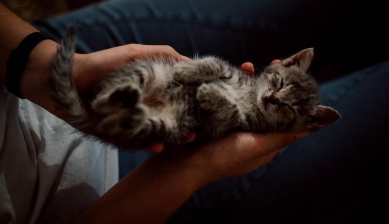 Gatti che dormono su di noi