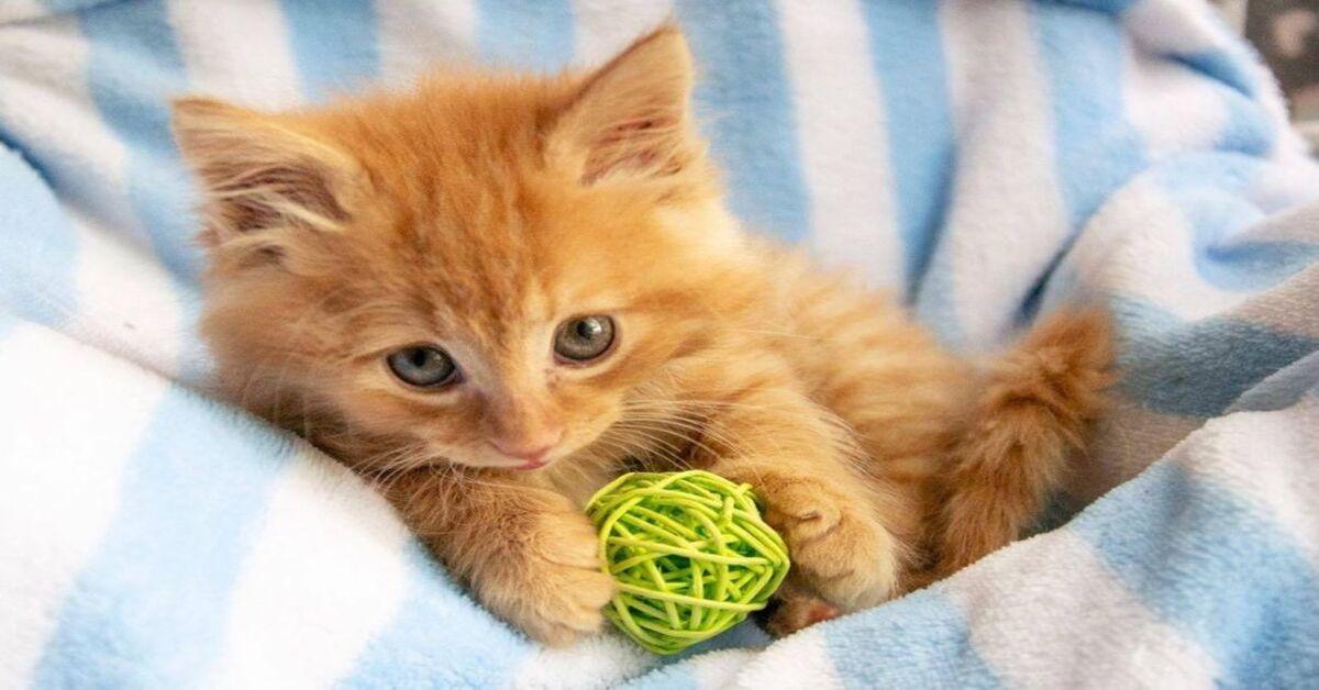 gattino con pallina
