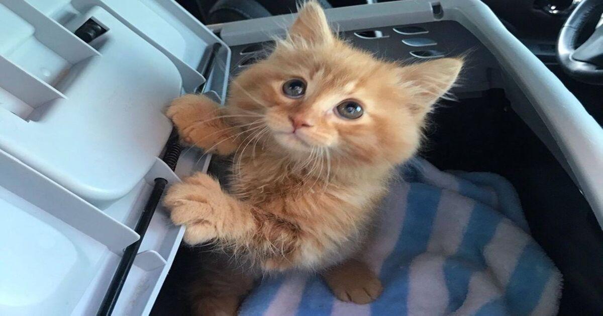 gattino che osserva