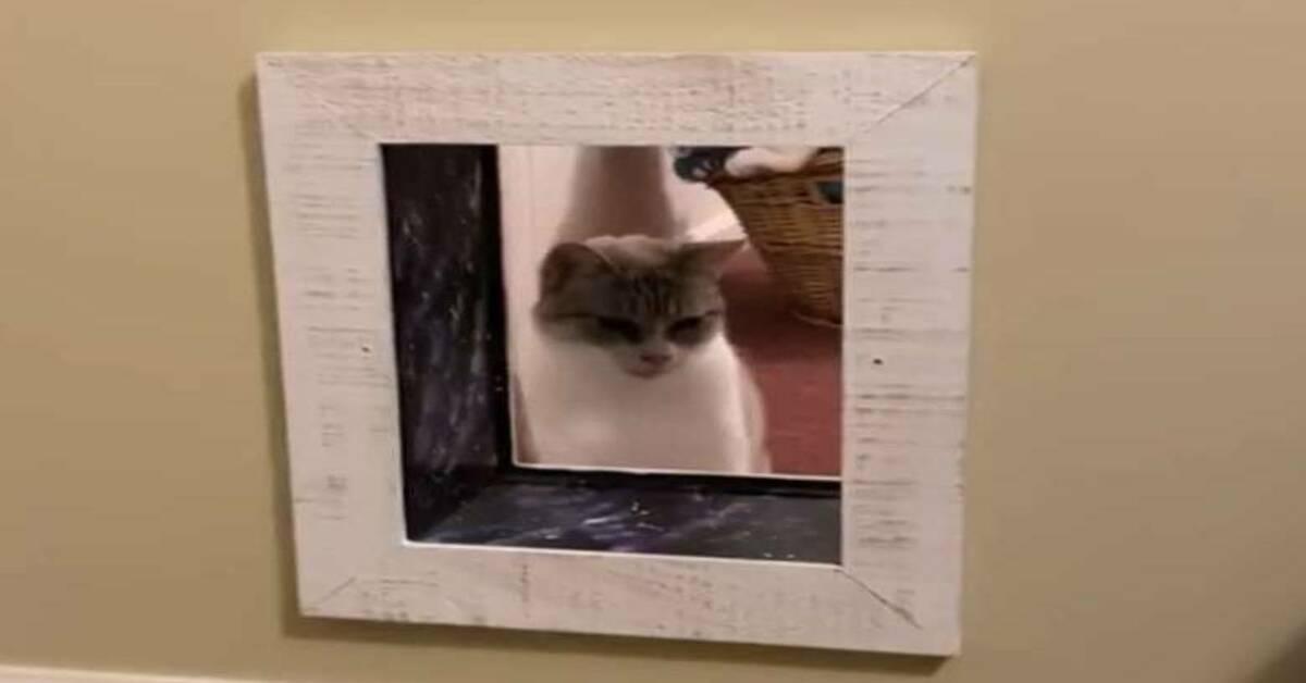 gatto e passaggi nel muro