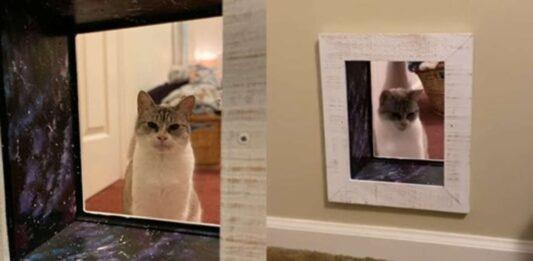 gatto e passaggio nel muro