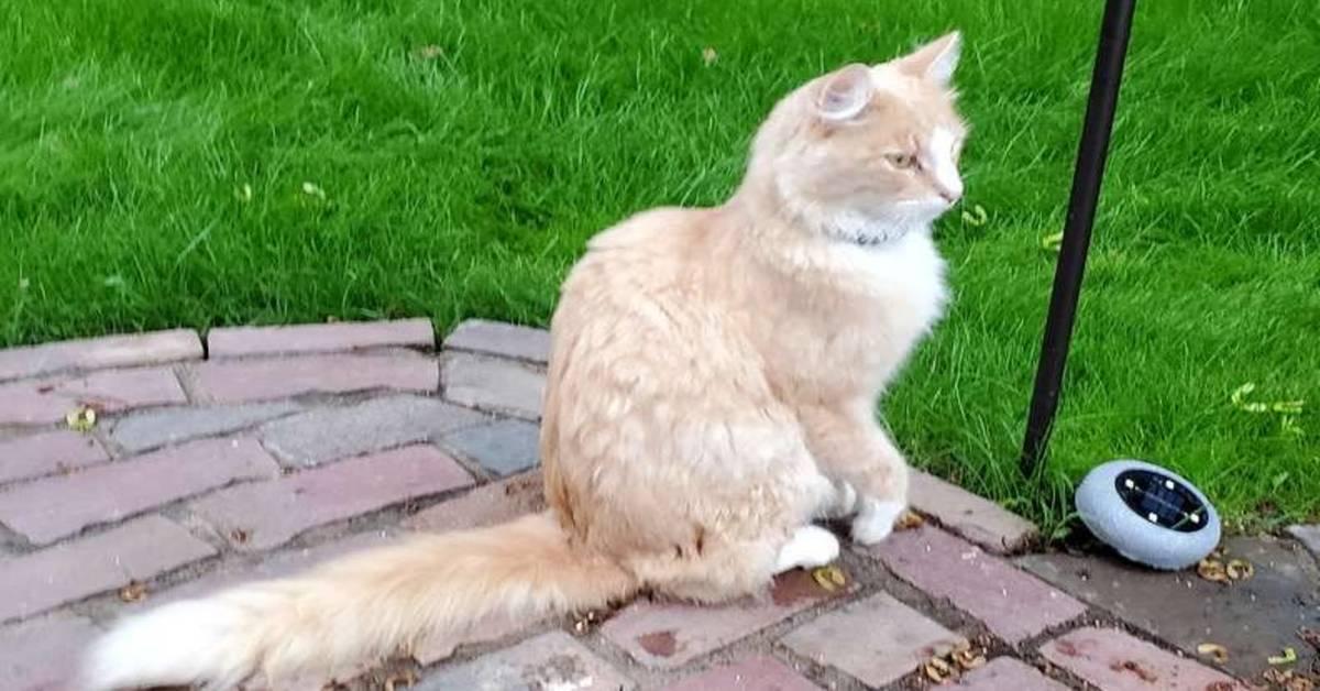 gatto seduto