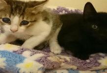 Due gattini vicini