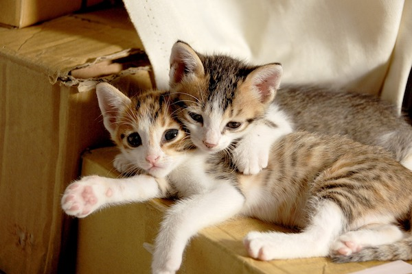 quali sono le cucce per gatti