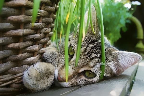 gatto dorme nella cuccia