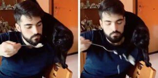 gatto che fa cadere il cibo