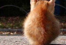 gatto di spalle