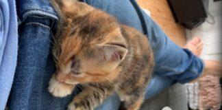 gattino trema incubi video
