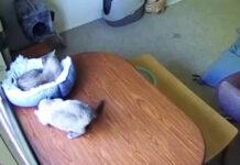 Gattini su un tavolo