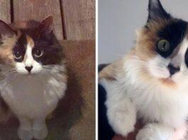 gattina in posa