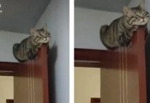 Gatto che dorme su una porta
