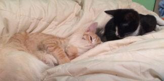 Gattini in un letto