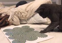 Gatto guarda illusione ottica