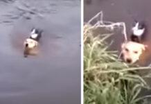 Gatto salvato da un cane
