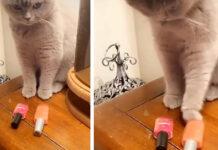 Gattino sceglie smalto