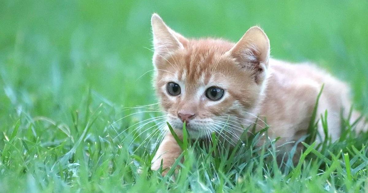 Gattino in un prato