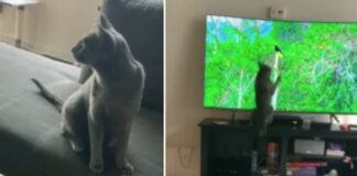 Gatto con un uccello alla tv
