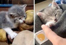 gattina randagia salvataggio