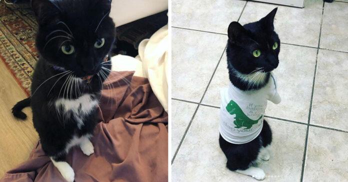 Gattino senza le zampe anteriori