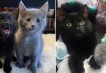 gattini in posa