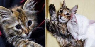 gattino in posa