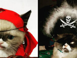 Gattino con benda su un occhio