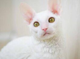 gatto dal carattere molto dolce