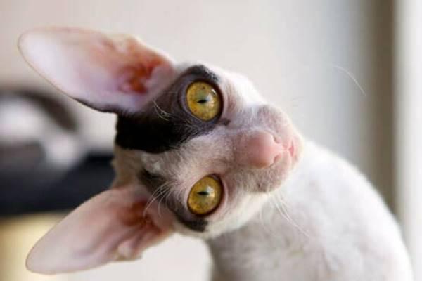 espressione dolce e buffa del gatto