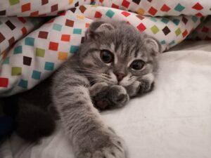 gatto accucciato tra i cuscini