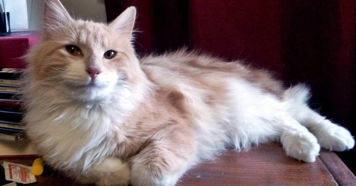 gatto che riposa in casa
