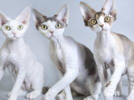 gatti di colori diversi
