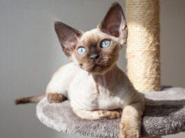 gatto che riposa sul tiragraffi