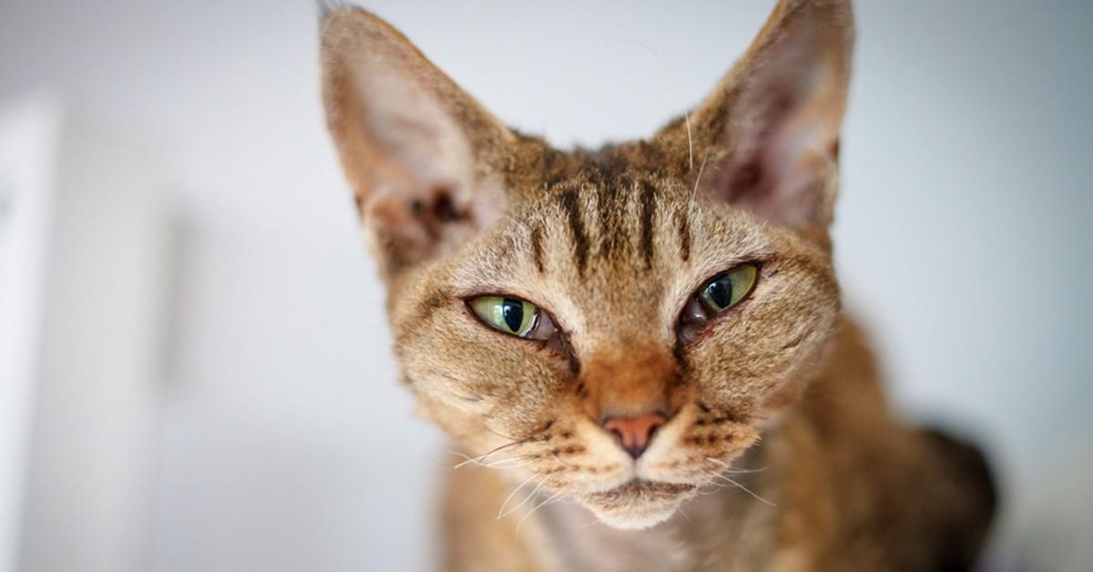espressione dolce del gatto