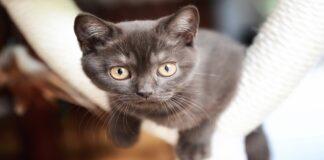 gattini a che velocità crescono