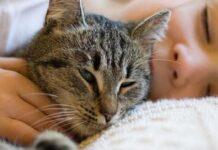 gatto tigrato e bambino che riposano