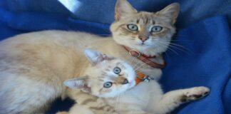 gattini e mamme gatto si abbracciano