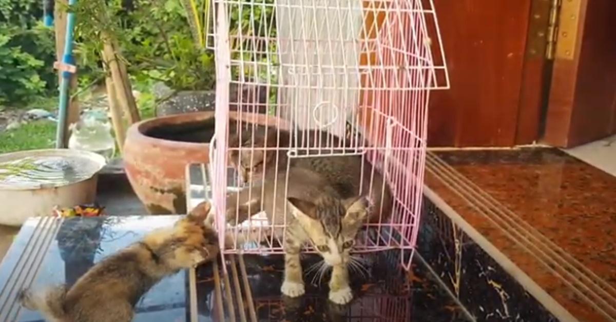 gattini che giocano in giardino