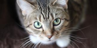 gattino come vede gli esseri umani