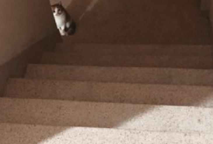 venen gattina sensazione strana cane