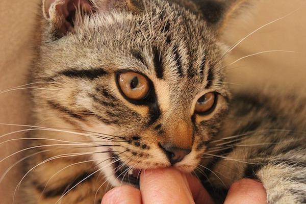 gattino mordicchia la mano