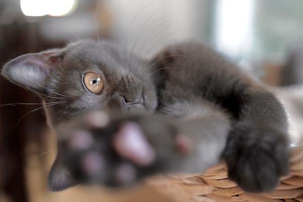 gattino gioca con zampetta
