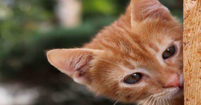 gattino triste non riesce a muoversi