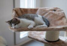 gattino con primo gioco tiragraffi
