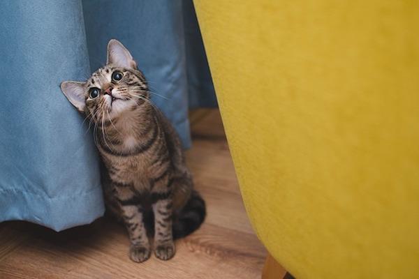gattino molto curioso