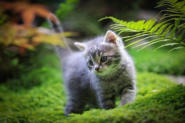 gattino che scorrazza nel prato