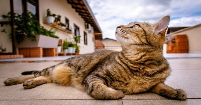 gattino ormai adulto